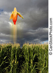 Corn Flying - Corn flying like a missile