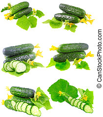 Collage of Cucumbers on white background - Collage...