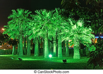 Night illumination in Park Riviera , Sochi city- Capital of...