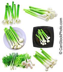 collage, (set), giovane, aglio, bianco, isolato