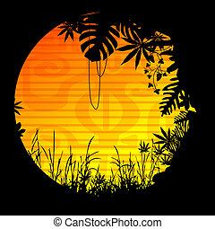 Sun, motive, vegetation, forest,