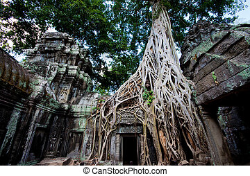 Tree roots over an ancient temple, the famous location of...