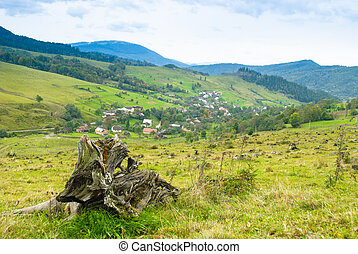 Environmental protection, llen tree on the foreground