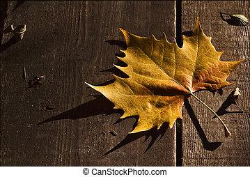 Liść, jesień, drewno