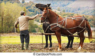 Farmer with two horses in field - Farmer ploughing in field...