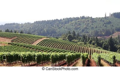 Wine Vineyard on Rolling Hills - Scenic View of Winery...