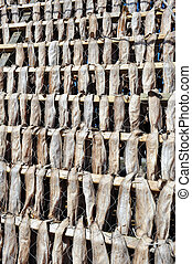 Stockfish in Norway