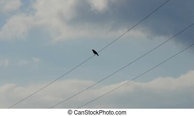 rook on a power line