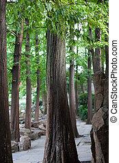 Wald - China