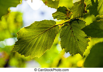 leaves of a tree in detail
