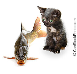 Home cat and a carp fish isolated