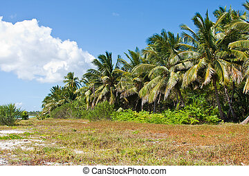 Lush foliage in tropical jungle - Magnificent tropical...