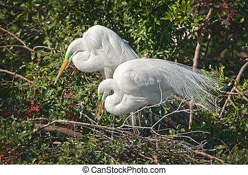 florida birds