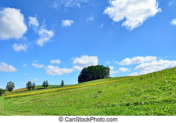Landscape of Biei, Hokkaido. (Small forest on the hill)