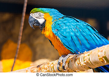 Parrot - Beautiful exotic parrot in zoo.  Ara ararauna
