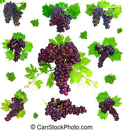 colagem, isolado, uvas,  foliage