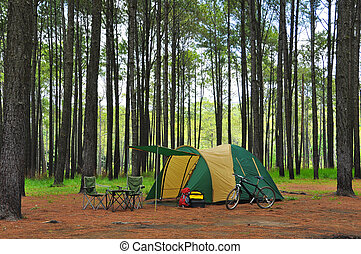 camping in pine forest