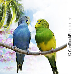 Budgerigar Parrots - Two Budgerigars Perching On A Branch