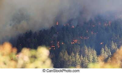 Fire in the forest - Raging pine tree fire across the hill,...