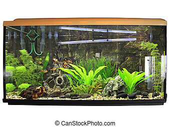 Beautiful aquarium. Isolated over white