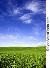 Spring field - Beautiful green meadow with a bright blue sky