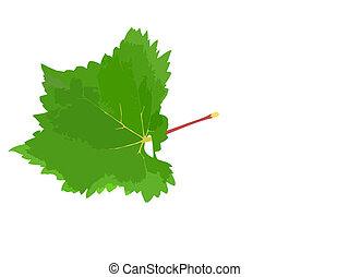Grapes green leaf tendril. - Grapes green leaf with vine...
