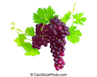 Black grape on cane vine with leafe Vector