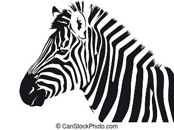 Zebra - Abstract vector illustration of a zebra