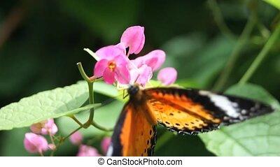 Butterfly farm.