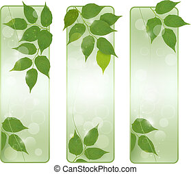 Three nature banners with green fresh leaves . Vector illustration.