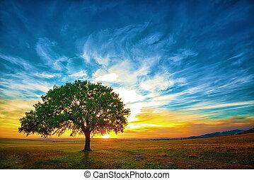 Dąb, drzewo