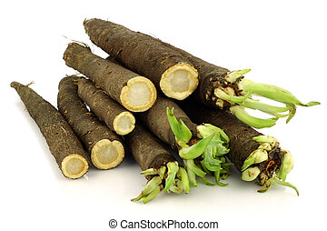 freshly harvested black salsify - bunch of freshly harvested...
