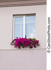 Old house, window, jalousie and flowers - Old house, window,...