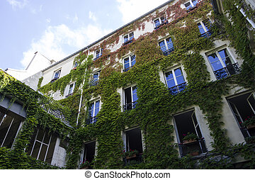 Courtyard, Paris, France Ivy vine climbing on building wall