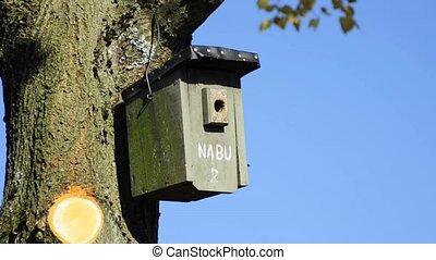bird s house