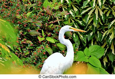 Herron in the garden