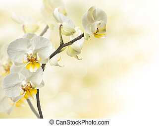twig blossoming orchids on a blurred background