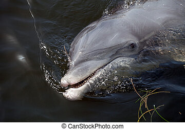 Cute Florida Dolphin - A wild Florida Dolphin that the...