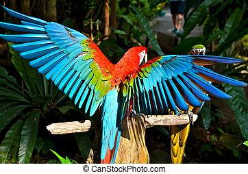 深紅, 金剛鸚鵡