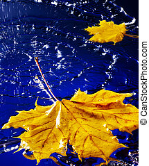 Yellow autumn leaf floating on water with rain