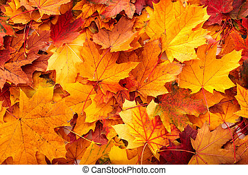 Background group autumn orange leaves Outdoor