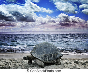 Big Turtle On The Ocean Beach - Big Turtle On The Tropical...