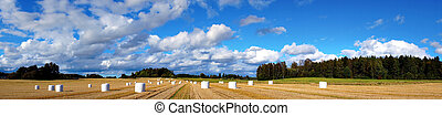 Rural panorama - Panorama view of rural landcape with hay...
