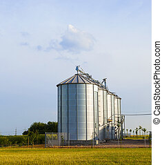 silver silos in corn field - four silver silos in corn field...