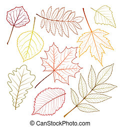 autumn leaves - collection beautiful autumn leaves isolated...