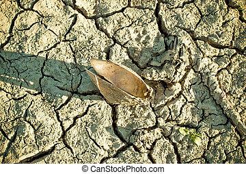 seco, cáscara, río, fondo