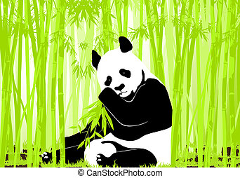 Panda bear - Hungry giant panda bear eating bamboo
