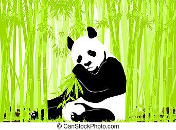 Panda bear - Hungry giant panda bear eating bamboo
