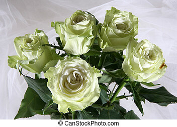 Greenish roses on a white fabric