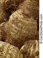 fresh taro root(colocasia) - background of fresh taro...